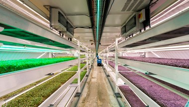 33 metres below London is a farm, growing food for the city from within the city.