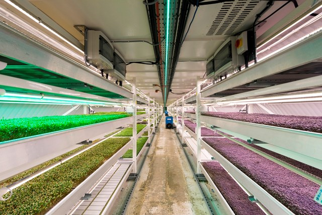 The growing underground farm