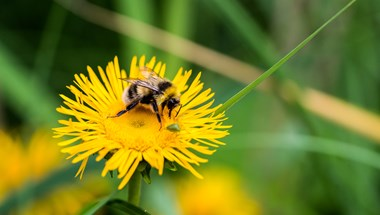 Due to a combination of factors including climate change, loss of habitat and pesticides, bee populations have been declining at alarming rates in recent years